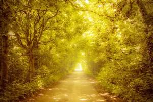 30 prachtige voorjaarsfoto's
